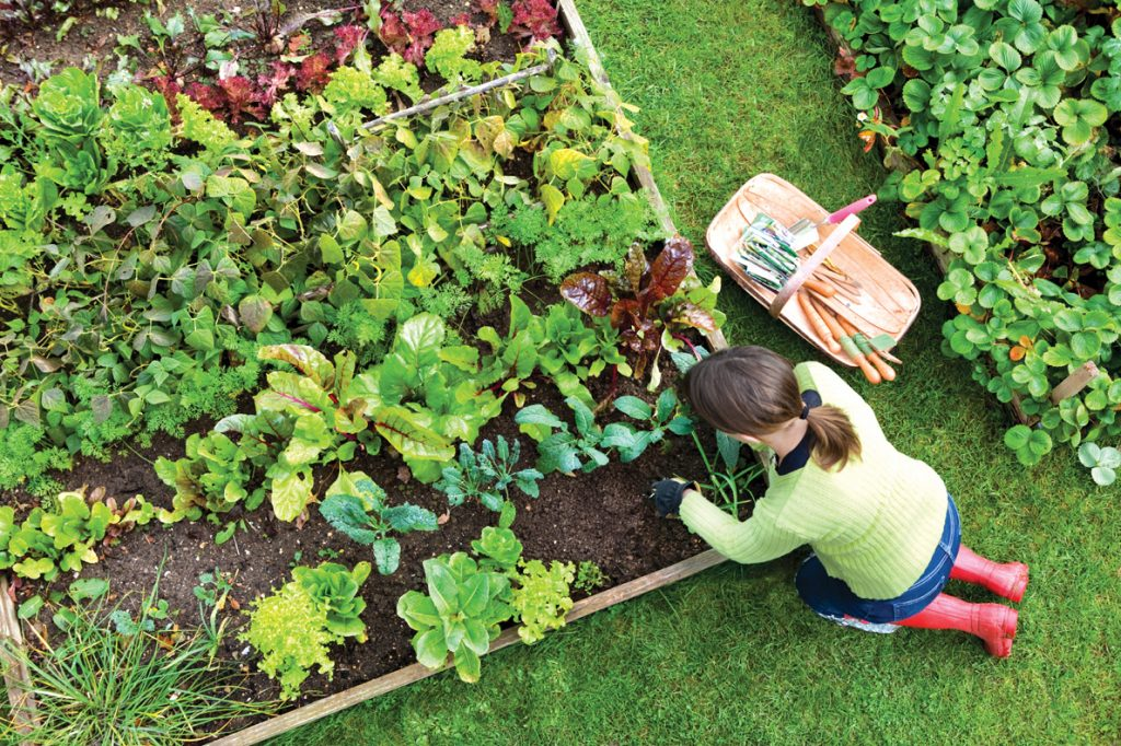 Tips For Your Organic Garden